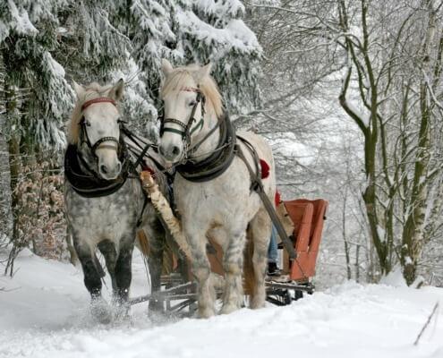 Pferdeschlittenfahrten in Grainau